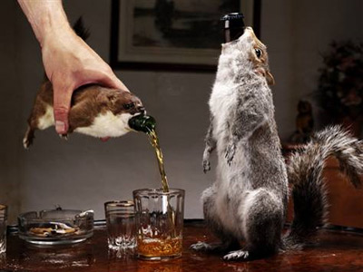Beer alcohol booze ale dead animal animals taxidermy