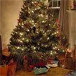 N-Dubz's Christmas message