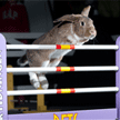 Win tickets to the London Pet Show