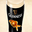 Theres a fish in my Guinness