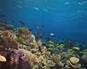 Google adds stunning underwater panoramas to street view maps