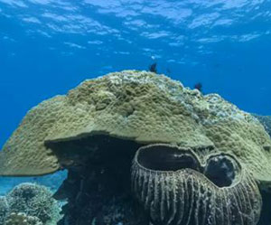 Great Barrier Reef in danger after losing half its coral