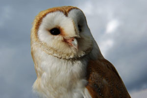 UK's bird population has declined by 44m in the last 40 years, says study