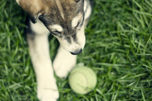 Six Things Your Pet Insurance Company May Not Cover