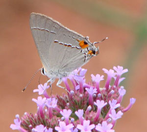 Flowers and insects communicate through electric signals, says study