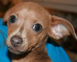 How to get a cheap pet insurance plan