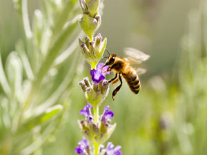 MPs urged the government to ban pesticides to save bees