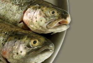Fish consumption could prolong older people's life, says study