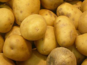 Irish potato famine source identified