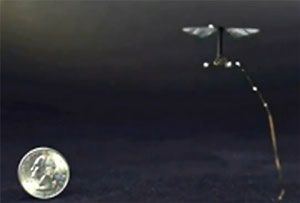 A robotic insect makes flight
