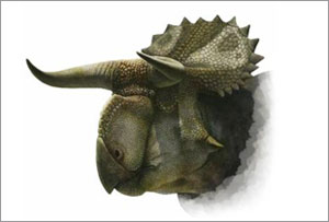 New dinosaur species, Nasutoceratops, discovered in US
