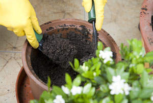 Creating An Eco-Friendly Garden Is A Must -  And Very Easy To Do