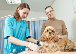 Most Pet Owners Diagnose on Search Engines