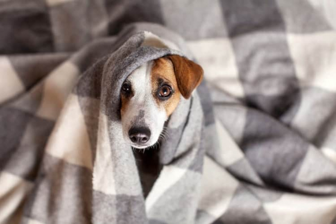 Why You Should Buy Your Dog Their Own Blanket